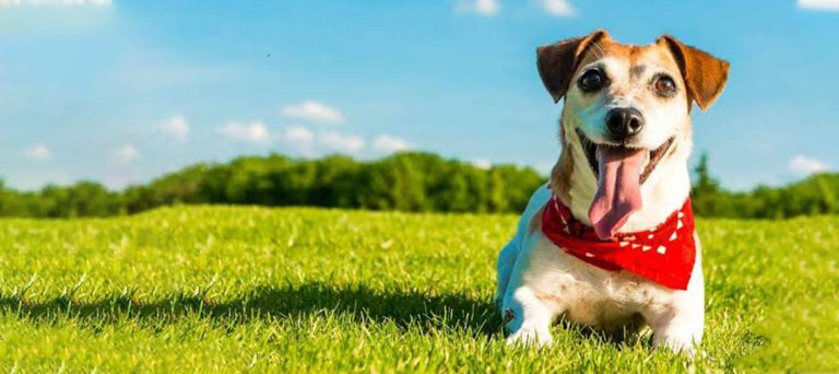 ¿Tienes miedo de esterilizar a tu mascota?