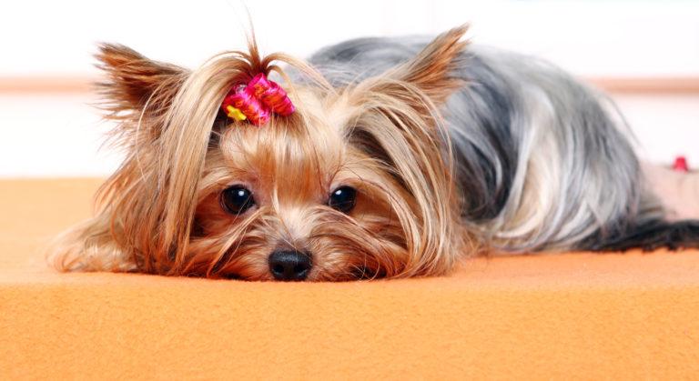 Evitar intoxicaciones en nuestras mascotas
