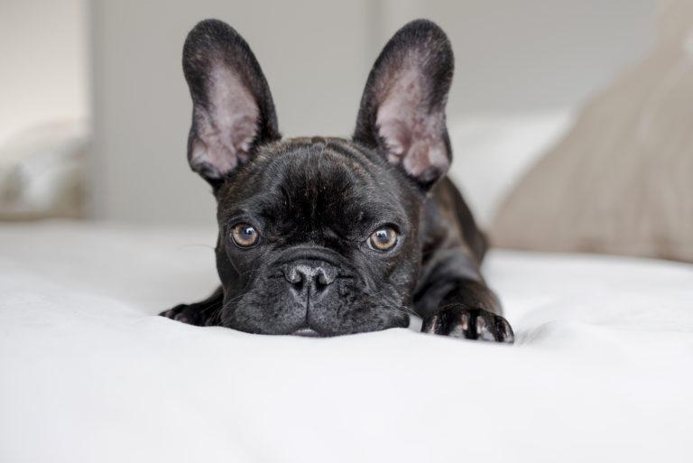 Epilepsia canina en tiempos de covid-19