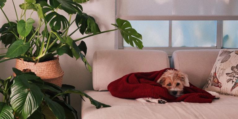Qué podemos hacer y qué no si tenemos perro durante la crisis por el coronavirus