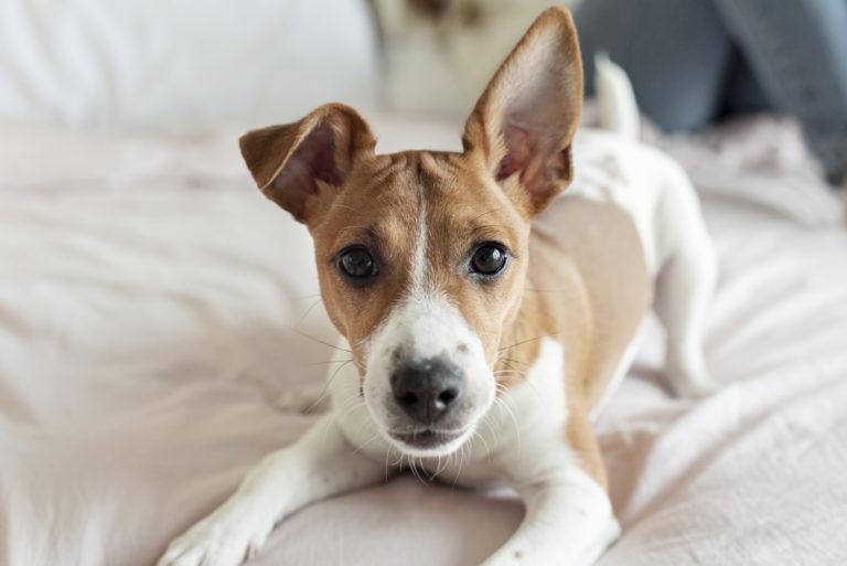 ¿Puedo sacar a mi perro a hacer sus necesidades ante las nuevas restricciones del gobierno?