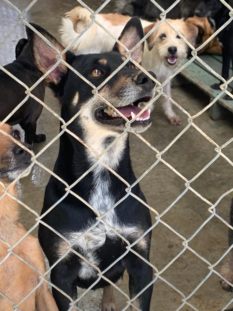 Adopciones de mascotas durante la cuarentena – Medellín.