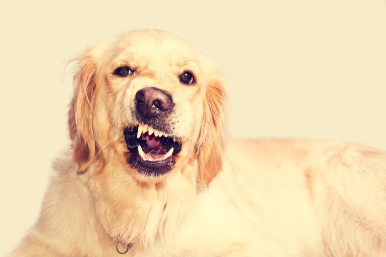 ¿Cómo saber si tu perro está enojado?