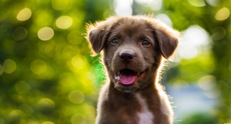 El cambio de dientes en nuestro perro