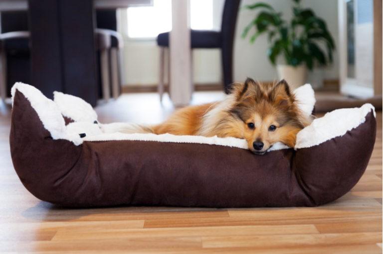 ¿Cómo elegir la cama de mi perro?