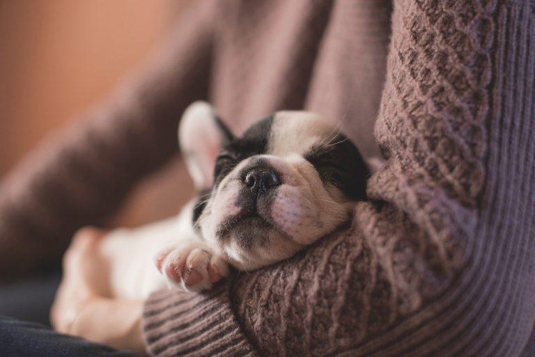 Tips: Tu primer perro en casa!