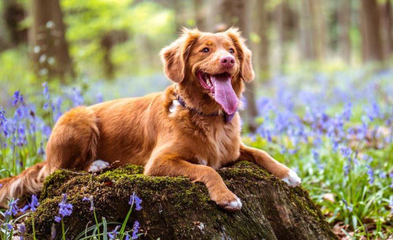 La importancia de la estimulación cognitiva en tu perro
