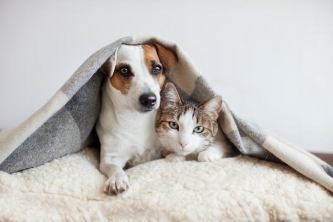 ¿Cómo hacer que un perro y un gato se lleven bien?