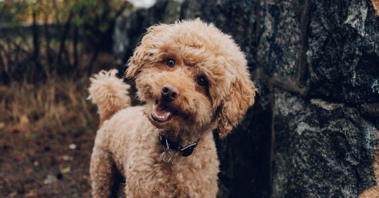 ¿Cómo mantener la higiene de mi perro?