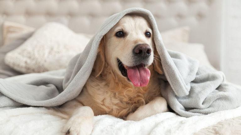 ¿Cómo saber si mi perro tiene frío?