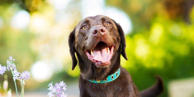 Conoce los superalimentos para perros