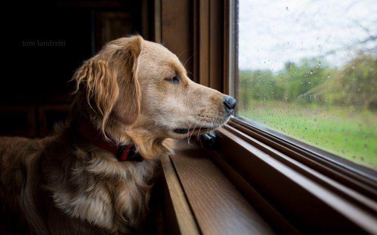 ¿Por qué a mi perro le gusta mirar por la ventana?