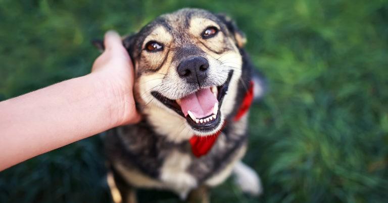 Los beneficios de acariciar a tu mascota