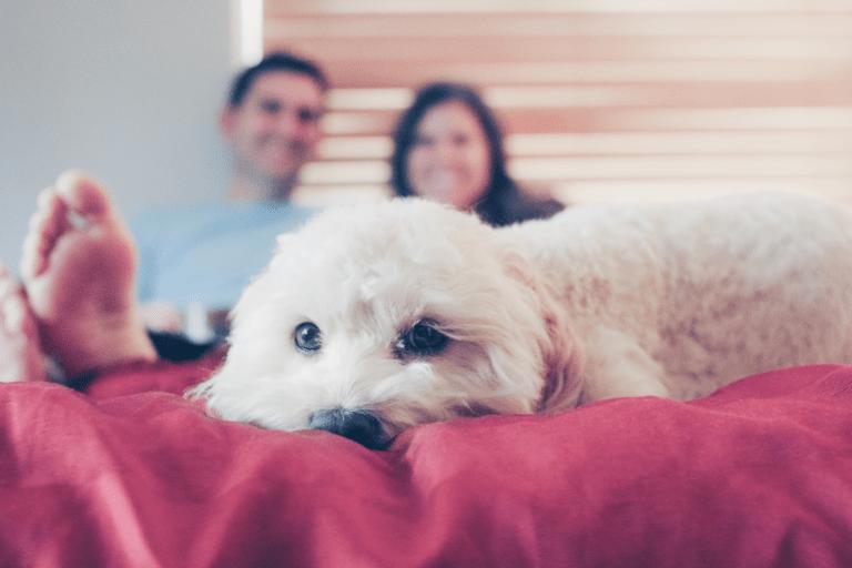 ¿Tener perro me puede ayudar a encontrar pareja?