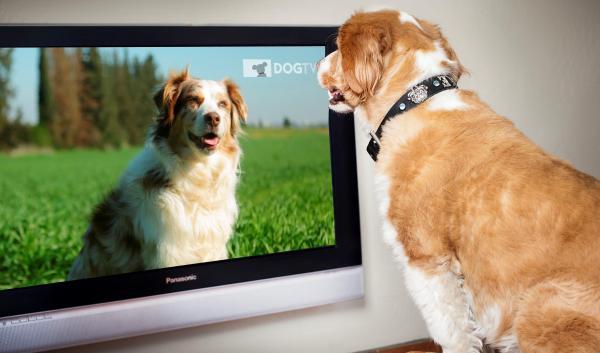 ¿Los perros ven televisión?