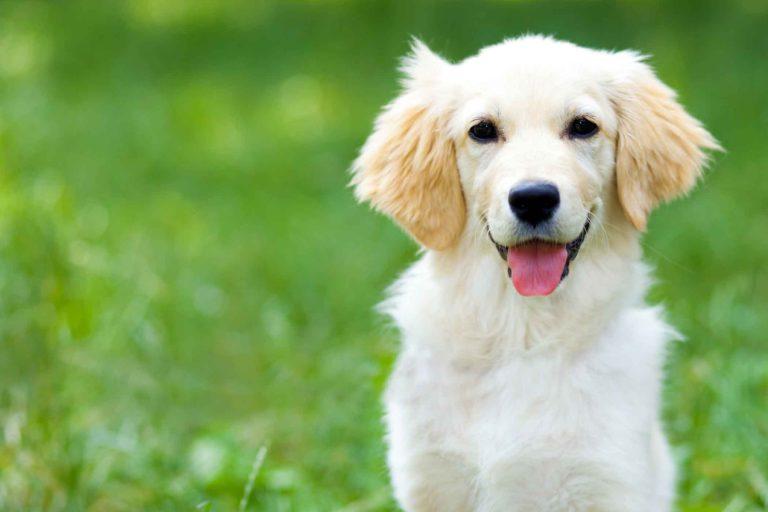 Mitos sobre la esterilización de mascotas