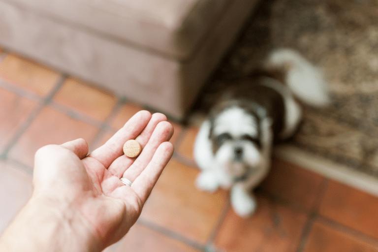 ¿Cómo darle una pastilla a mi perro?