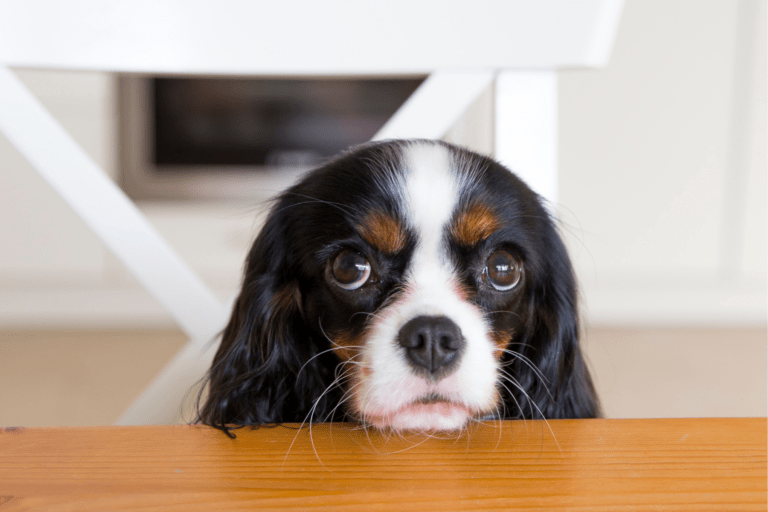 ¿Cómo evitar que mi perro mendigue comida?