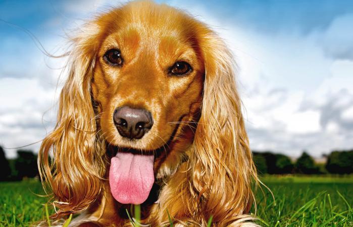 Receta de galletas para perros