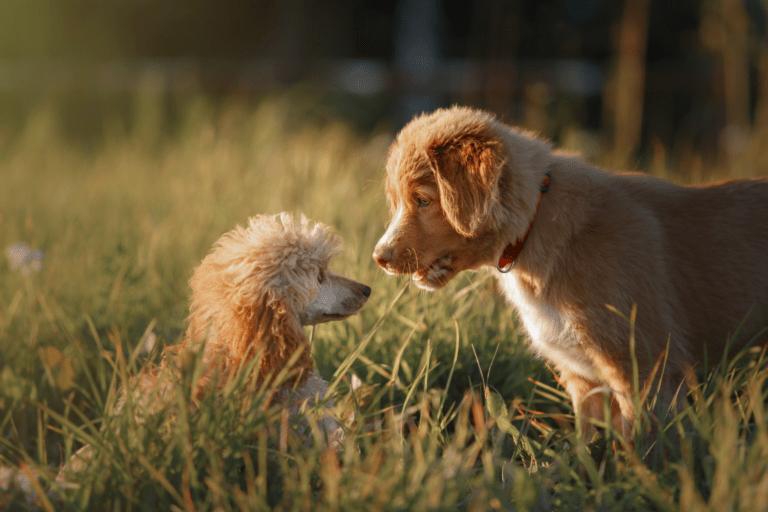¿Por qué es importante la socialización en los perros?
